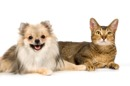 A-1 Cat and Critter Care
